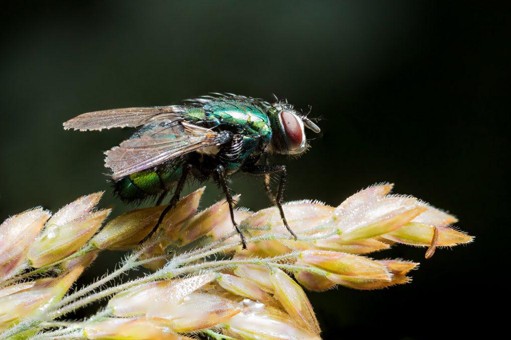 Fliege-Seitenaufnahme